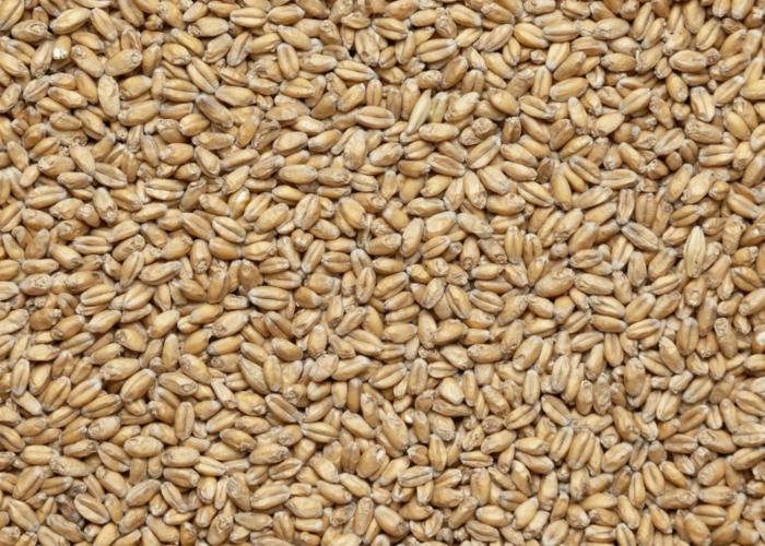 Пшеничный - интерьер  - всефото.рф