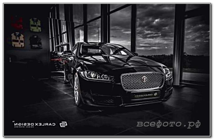 41 - Jaguar